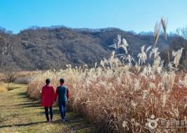 민통선 내의 때 묻지 않은 자연을 만날 수 있는 임진강평화습지원